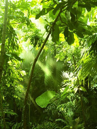 Tropical Forest, Trees In Sunlight And Rain-odmeyer-Photographic Print