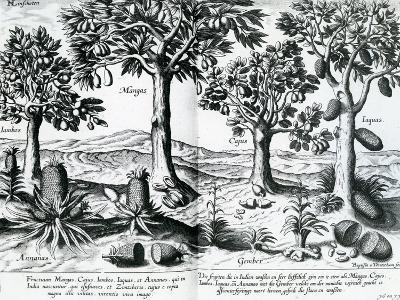 Tropical Fruit Trees, 1596-Johannes Baptista van Frueauf the Younger-Giclee Print