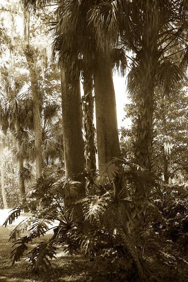 Tropical Garden 2-Alan Hausenflock-Photographic Print
