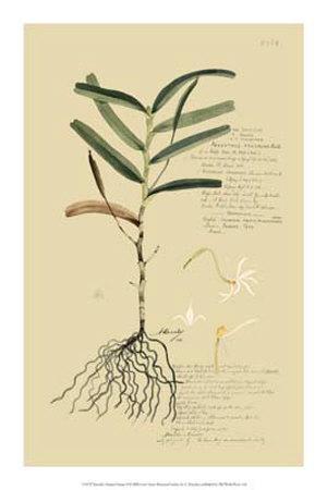 https://imgc.artprintimages.com/img/print/tropical-grasses-ii_u-l-f18h4g0.jpg?p=0