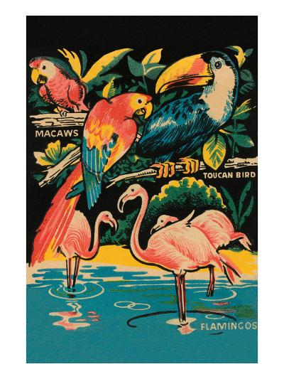 Tropical Hobbyland - Birds--Art Print