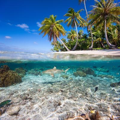 Tropical Island under and Above Water- Blueorangestudio-Photographic Print