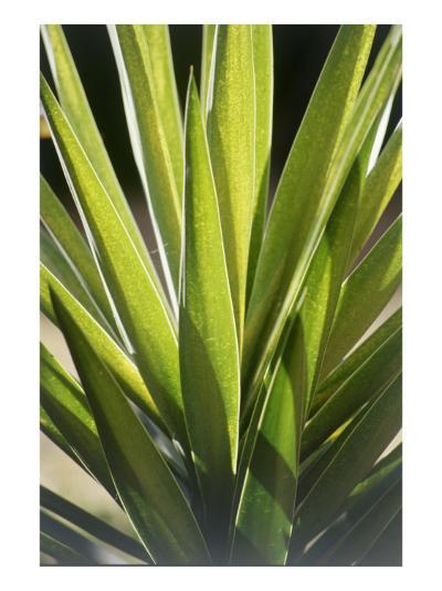 Tropical Leaf 8-Porter Design-Premium Giclee Print