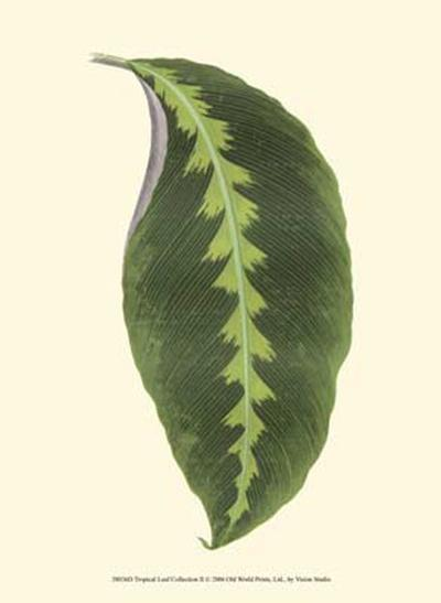 Tropical Leaf Collection II--Art Print