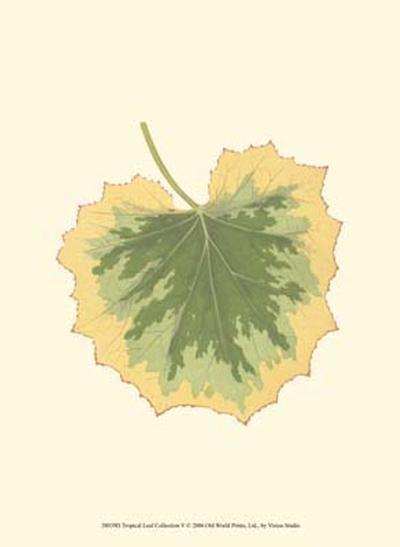 Tropical Leaf Collection V--Art Print