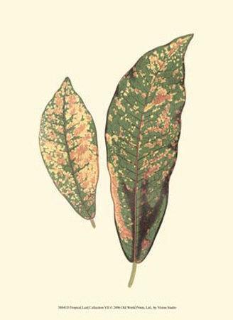 Tropical Leaf Collection VII--Art Print
