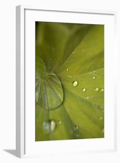 Tropical Leaves I-Karyn Millet-Framed Photographic Print