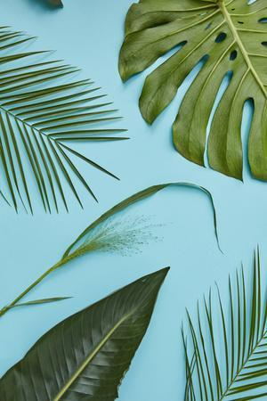 https://imgc.artprintimages.com/img/print/tropical-leaves_u-l-q1bzkbn0.jpg?p=0