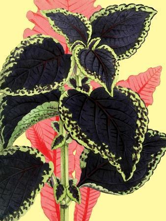 Tropical Leaves--Art Print