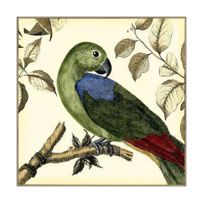 Tropical Parrot III-Martinet-Art Print
