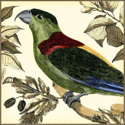 Tropical Parrot IV-Martinet-Art Print