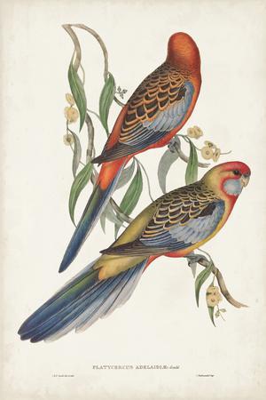 https://imgc.artprintimages.com/img/print/tropical-parrots-ii_u-l-q1c4r8v0.jpg?p=0