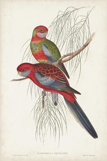 Tropical Parrots III-John Gould-Art Print