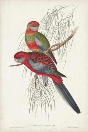 https://imgc.artprintimages.com/img/print/tropical-parrots-iii_u-l-q1c4spx0.jpg?p=0