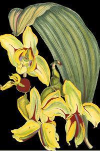 Tropical Plant on Black I