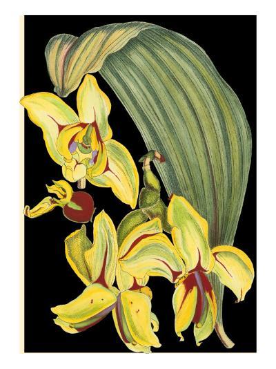 Tropical Plant on Black I--Art Print