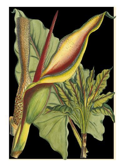Tropical Plant on Black II--Art Print