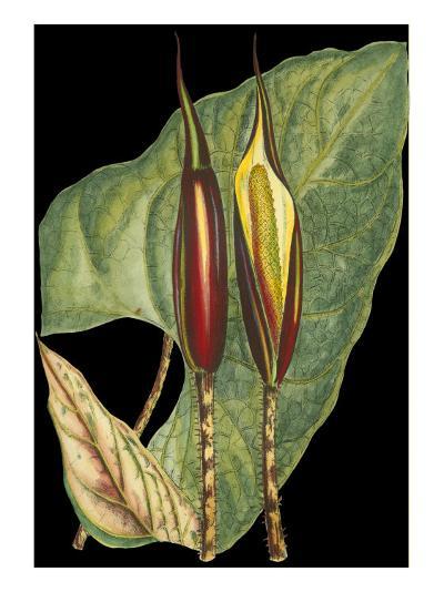 Tropical Plant on Black IV--Art Print