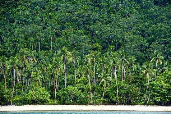 Tropical Rainforest and Palm Trees Line a Beach on a Deserted Island-Jason Edwards-Photographic Print