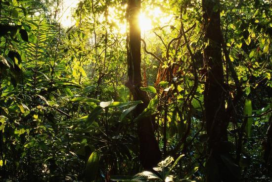 Tropical Rainforest in Panama--Photographic Print