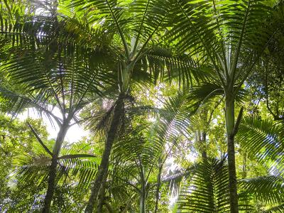 Tropical Rainforest Spreads in All Directions on a Sunny Day-Taylor S^ Kennedy-Photographic Print
