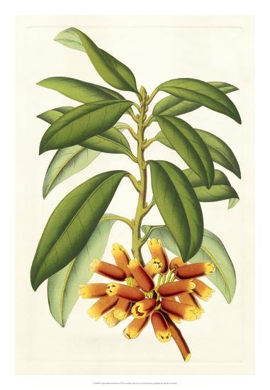 Tropical Rhododendron I-Horto Van Houtteano-Giclee Print