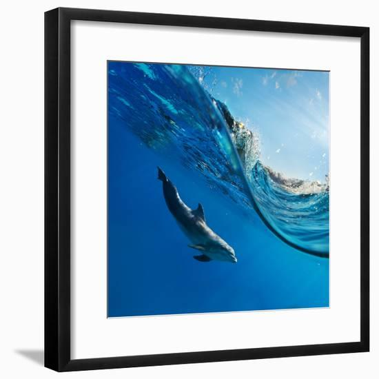 Tropical Seascape with Water Waved Surface and Dolphin Swimming Underwater-Willyam Bradberry-Framed Photographic Print
