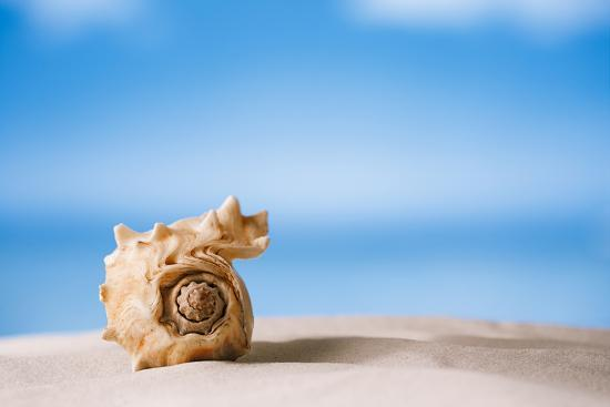 Tropical Shell on White Florida Beach Sand under Sun Light, Shallow Dof-lenka-Photographic Print