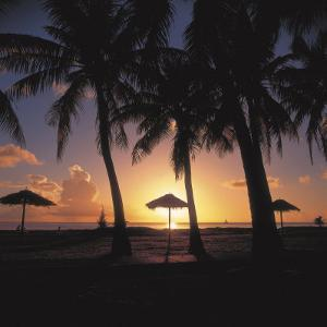 Tropical Straw Beach Umbrellas and Palm Trees on Deserted Beach under Cloudy Sky at Sunset