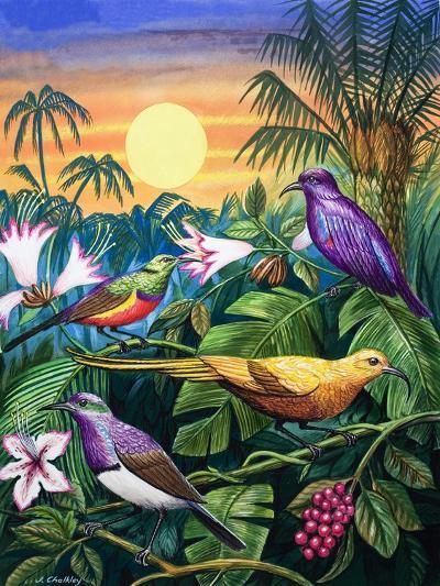Tropical Sunbirds-John Chalkley-Giclee Print