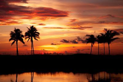 Tropical Sunset with Palm Trees-Paul Brady-Photographic Print