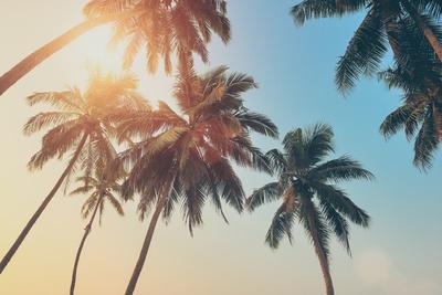 https://imgc.artprintimages.com/img/print/tropical-sunset_u-l-q105pyc0.jpg?p=0