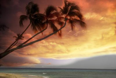 Tropical Sunset-Lyle Leduc-Photographic Print