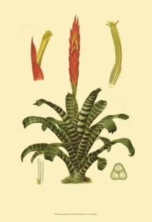 Tropical Tillandsia