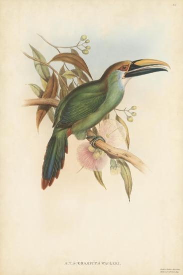 Tropical Toucans I-John Gould-Art Print