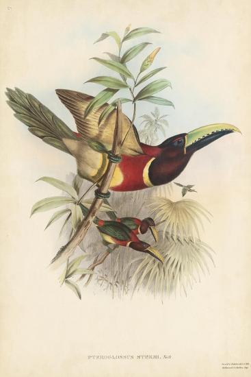 Tropical Toucans III-John Gould-Art Print