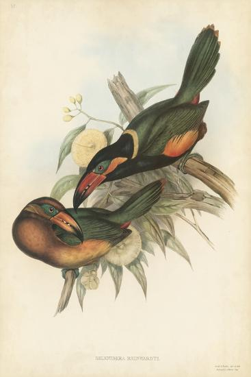 Tropical Toucans V-John Gould-Art Print
