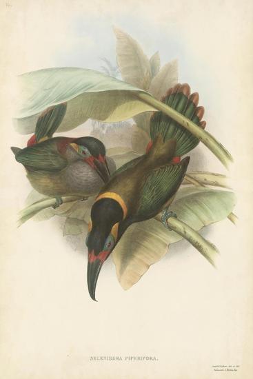 Tropical Toucans VI-John Gould-Art Print