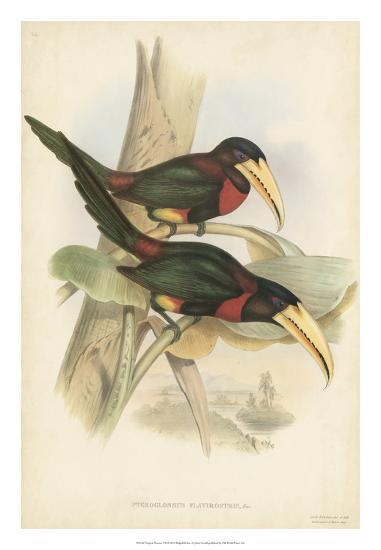 Tropical Toucans VII-John Gould-Giclee Print