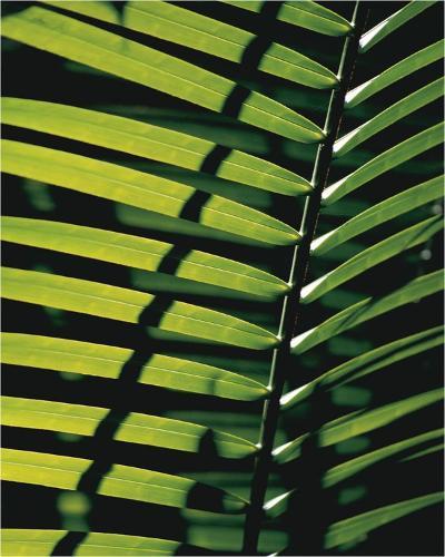 Tropicale-Catherine Thurel-Art Print