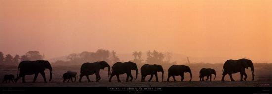 Troupeau d'Elephants-Michel & Christine Denis-Huot-Art Print