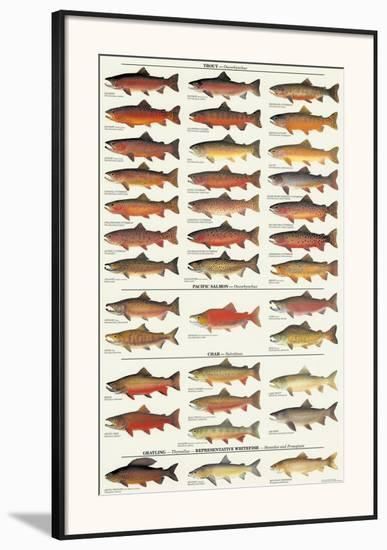 Trout, Salmon & Char of North America I--Framed Art Print
