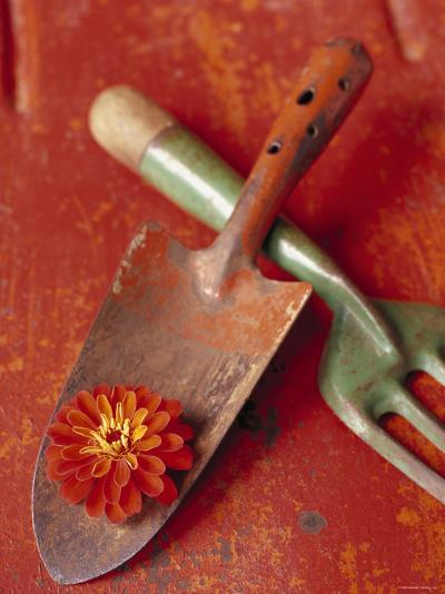 Trowel and Blossom--Photo