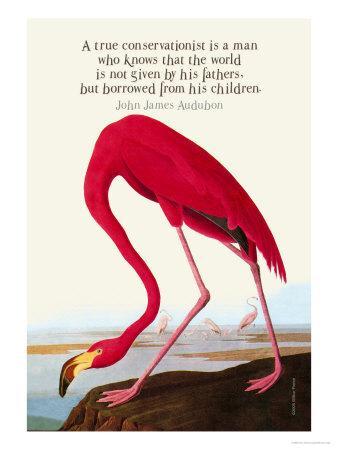 https://imgc.artprintimages.com/img/print/true-conservationist_u-l-p28anu0.jpg?p=0