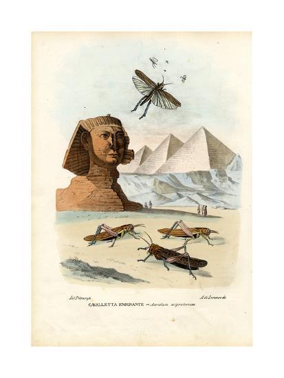 True Crickets, 1863-79-Raimundo Petraroja-Giclee Print