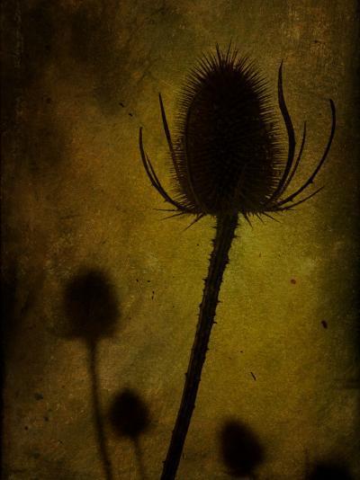 Trugen-Tim Kahane-Photographic Print