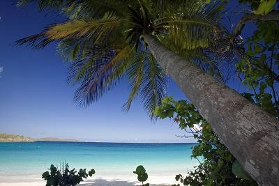Trunk Bay Palm Tree, St John, US Virgin Islands-George Oze-Photographic Print