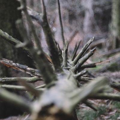 https://imgc.artprintimages.com/img/print/trunk-with-broken-branches_u-l-q1evtxe0.jpg?p=0