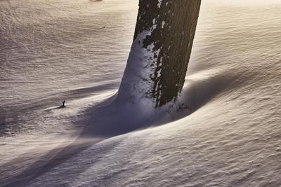 https://imgc.artprintimages.com/img/print/trunk-with-snowdrift-light-artistically-medium-close-up-detail_u-l-q1evdde0.jpg?p=0