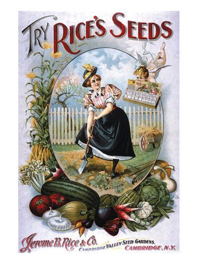 Try Rice's Seeds Cambridge--Art Print